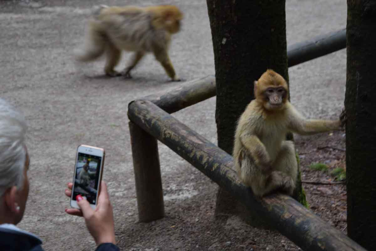 Handy-Foto von Affen