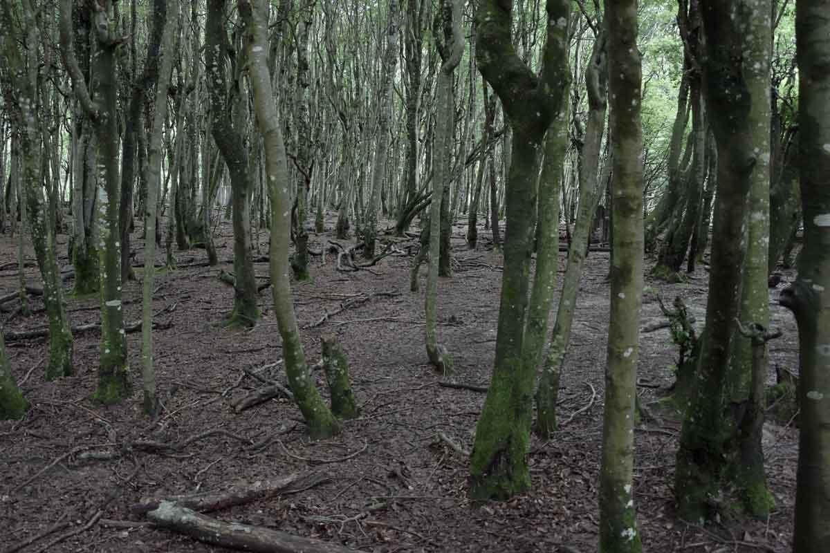Wald im Berberaffen-Gehege