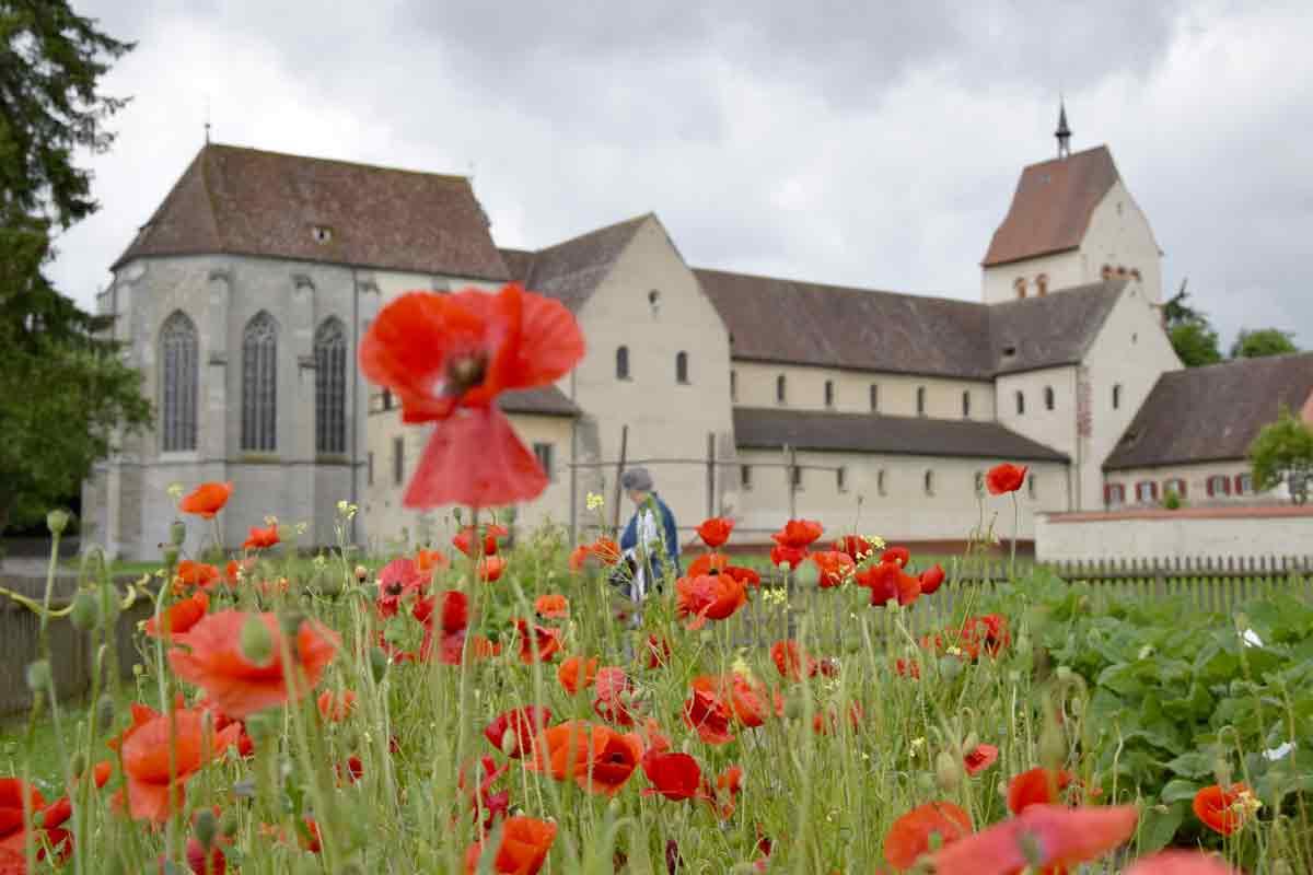 Die Blumen- und Gemüseinsel Reichenau gehört zu den kulturell wichtigsten Orten am Bodensee