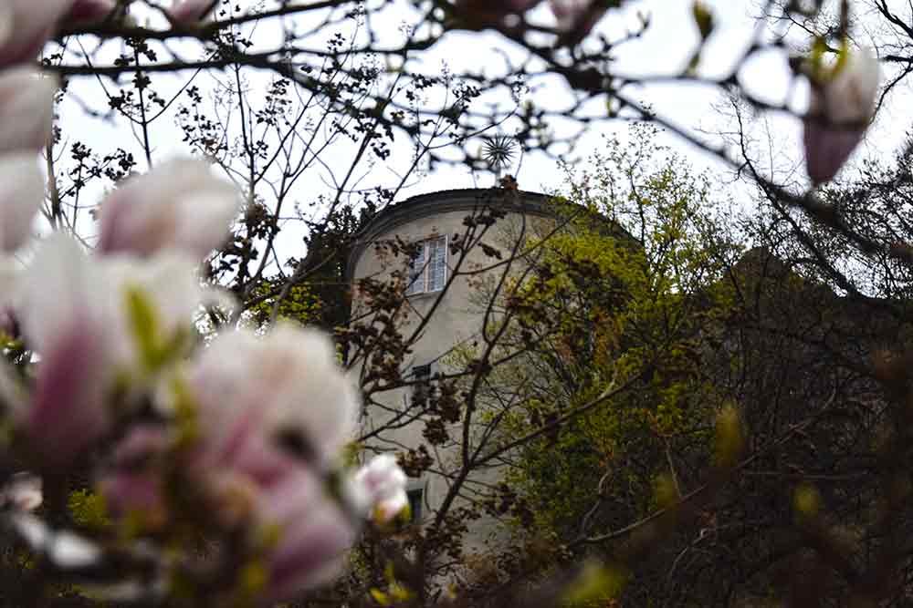 Magnoöien vor Burgturm