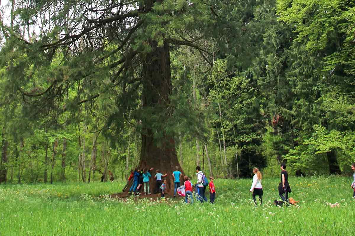 Kinder umarmen Mammutbaum
