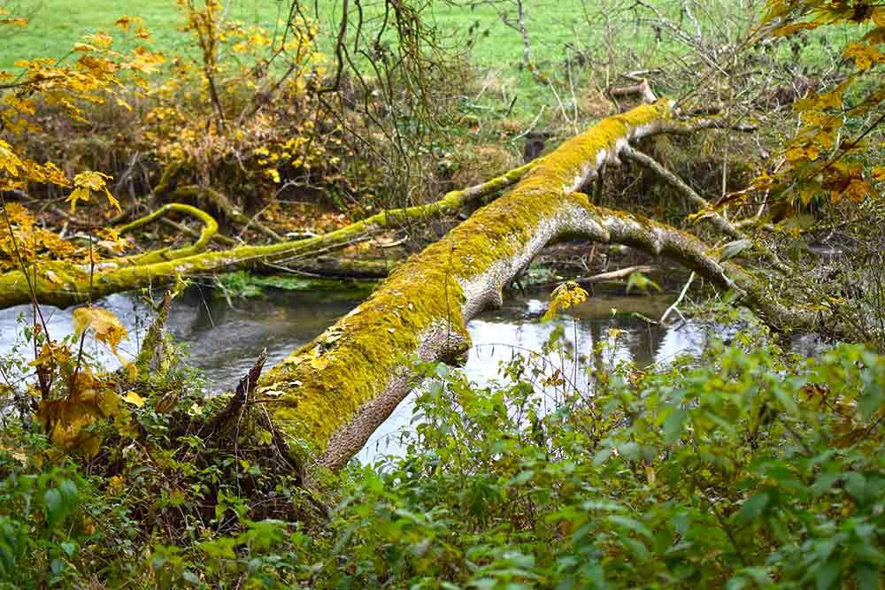 umegstürzter Baum über der Lauchert