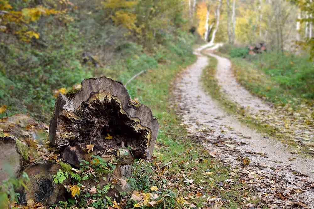 hohler Baumstamm mit Pilzen am Wegesrand