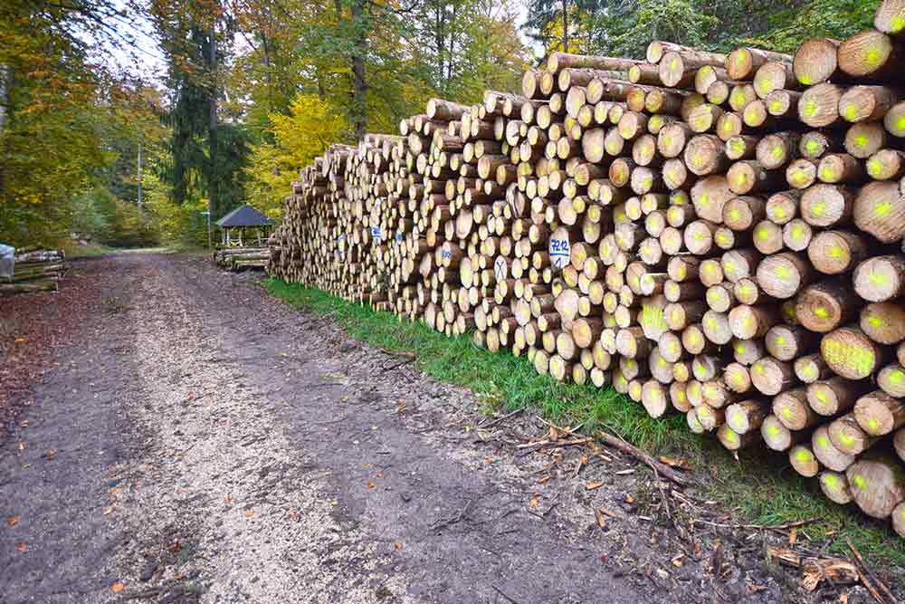 Schutzhütte mit Holzstapeln