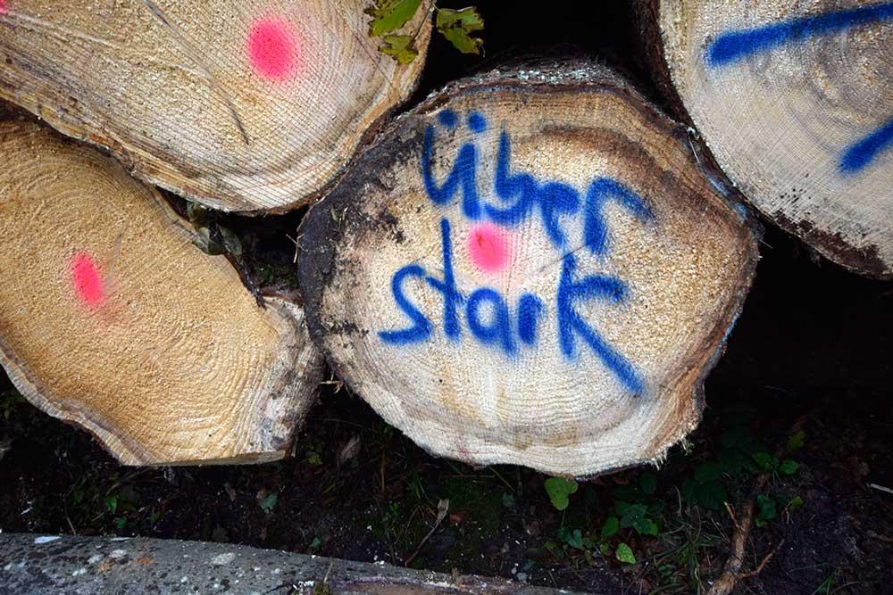 Baumquerschnitt mit Aufschrift: Über Stark