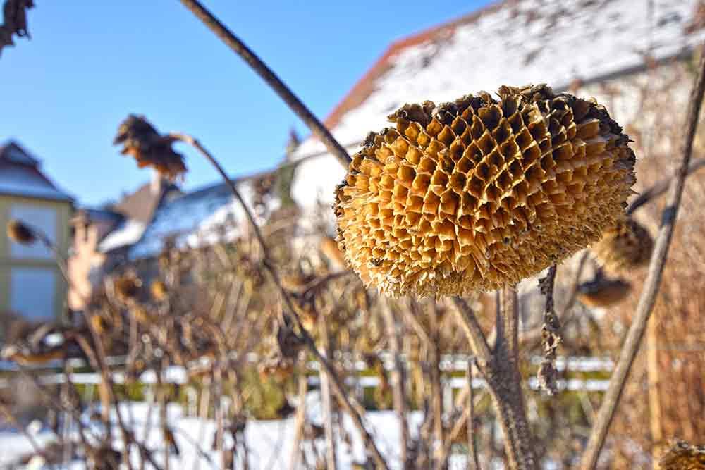 Pflanze im Winter