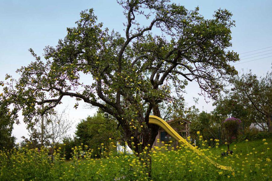 Pfaffenwinkel Apfelbaum mit Rutsche